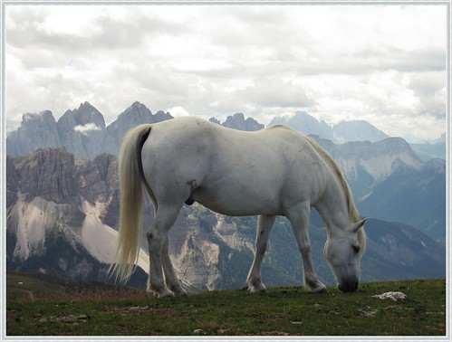 White Fantasy Horse