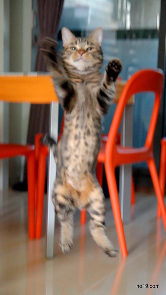 Vivi Jump! - DSC_0293