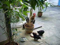 總覺得在畫廊外面養雞十分奇怪