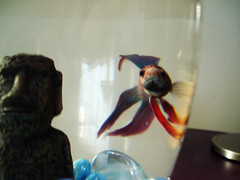 My New Nameless Fish