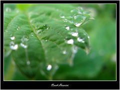 ..Only You.. (Naseh Andarzgoo) Tags: macro green strawberry raindrops flickrgathering