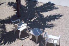 palm shaped shadows (kimberlynicole) Tags: fla flakeys
