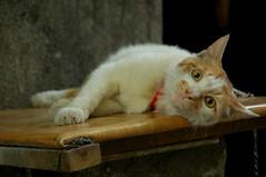 2008-0510-cat17