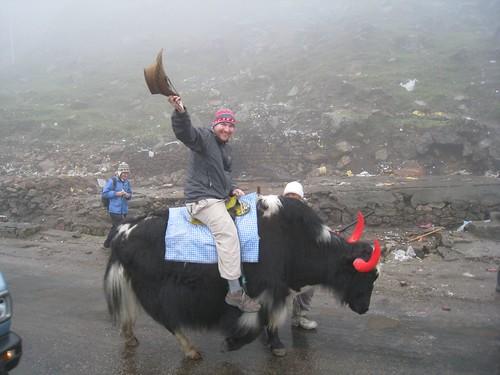 Riding a yak at 12,400 feet (India)