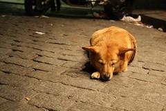 Waiting in Montmartre... (Amelien (Fr)) Tags: street city portrait dog chien paris face canon sleep montmartre rue ville visage sommeil pav 40d