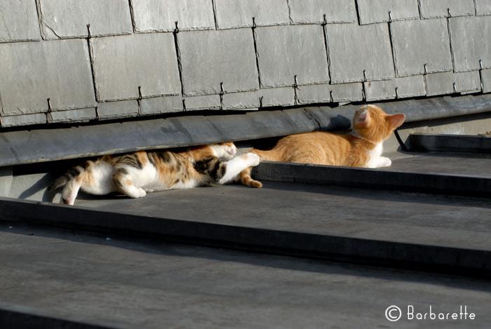 cat's commando