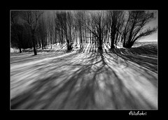 ( Ali Shokri / www.alishokri.com) Tags: winter blackandwhite snow tree nature landscape blackwhite fdsflickrtoys bravo perfect searchthebest iran quality loveit excellent awards 2008 photoart soe 07 backandwhite tabriz themoulinrouge naturesfinest goldenglobe blueribbonwinner littlestories bwdreams supershot outstandingshots flickrsbest spselection utatafeature golddragon abigfave shieldofexcellence platinumphoto anawesomeshot superaplus aplusphoto ultimateshot visiongroup holidaysvacanzeurlaub superbmasterpiece infinestyle treesubject flickrdiamond megashot allin1 bratanesque frhwofavs ysplix amazingamateur excellentphotographerawards superlativas theunforgettablepictures onlythebestare brillianteyejewel eliteimages colourartaward excapture flickrslegend betterthangood proudshopper theperfectphotographer goldstaraward flickrestrellas picswithsoul stealingshadows showmeyourqualitypixels alishokri magicdonkeysbest topqualityimageonly vision100 goldenvisions
