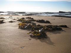culburra beach