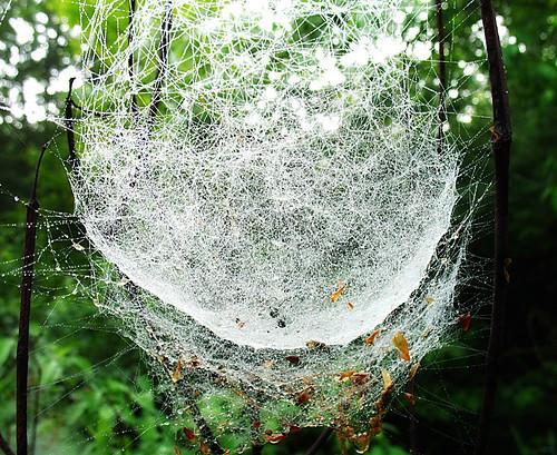 Bunkbed Spiderwebs