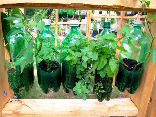 Que tal cultivar hortaliças em casa?
