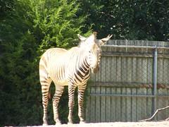 DSCF5952 (dondonnellyjr) Tags: animals zoo louisvillezoo