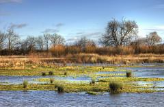 Wetlands: Low Tide (Tim Blessed) Tags: uk trees sky nature water clouds reeds landscape scenery lakes wetlands ponds singlerawtonemapped