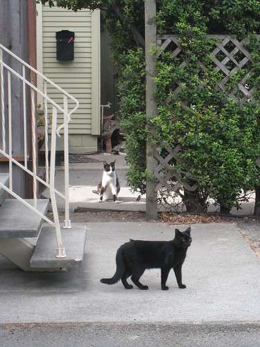 Neighborhood Cat Gang