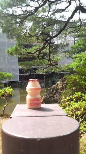 銀閣寺と乳酸菌