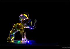 Elephant 8-4662-tlb (Arie van Tilborg) Tags: elephant color macro catchycolors colorful rainyday transparent opacity olifant chrystal kleur foolaround tilborg arievantilborg