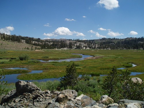 Whitesides Meadow 01