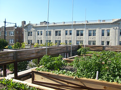 green space in the city! uncommon ground roof (Lisa Hammershaimb) Tags: roof chicago green rooftop nature true garden foods ground uncommon