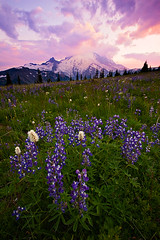 A Rainier Pastel Sunset (KPieper) Tags: flowers sunset moon mountain clouds washington meadows rainier pastels wildflowers mtrainier lupine landscap supershot kevinpieper kpieper pieperphotographynet