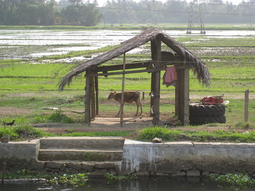 ox shack