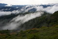 雲に刺さる針葉樹林