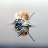 (Charlie.B / 'TBGS') Tags: abstract reflection water snail depthoffield anawesomeshot centralcomposition