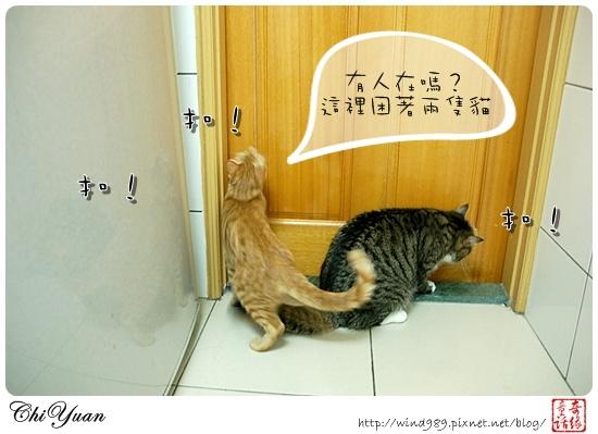 【貓季】學學如何開門(DINO+橘子)