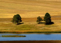 Three Trees, New Mexico (saxonfenken) Tags: trees orange usa newmexico water explore unam thumbsup 409 e510 naturesfinest twothumbsup bigmomma geottaged gamewinner supershot thumbwrestler challengeyouwinner mywinners abigfave ourplanet favescontestwinner theperfectphotographer september2008 friendlychallenges beautifulworldchallenges thechallengefactory vosplusbellesphotos herowinner pregamewinner treebeardtrees favescontestrunnerup 409trees