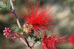 phoenix botanical gardens 10