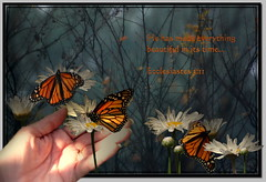 He Has Made Everything Beautiful In Its Time... (honey 77) Tags: flowers nature beautiful daisies outdoors hand god jesus butterflies insects lord christian wildflowers inspirational monarchs scriptures photoshopart bibleverse ecclesiastes311 inspiks|inspirationalpictures