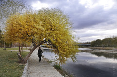 walking along the river (Alieh) Tags: blue water yellow persian iran persia automn iranian  esfahan isfahan      zayandehrood aliehs alieh        saadatpour