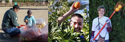 fruit-gleaning