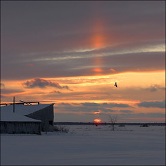 Vertigo  frozen sunset beauty (NaPix -- (Time out)) Tags: sunset snow canada laurentians bird farmhouse tree landscape clouds sky red orange napix silhouette explored explore front page explorefrontpage flicksbest image