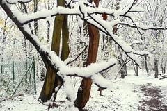 White Christmas (Gilderic Photography) Tags: christmas wood white snow tree forest landscape lumix europe december belgium belgique path chartreuse noel panasonic merrychristmas liege foret arbre blanc sentier chemin bois wallonie pansonic joyeuxnoel gilderic aplusphoto oblats dmctz4 grivegnee