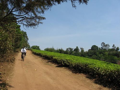 Africa 095