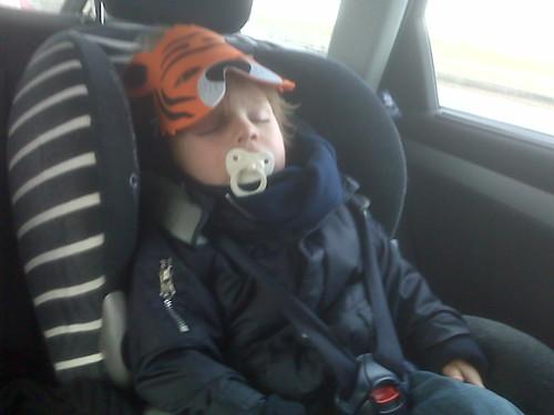 Sleeping tiger too