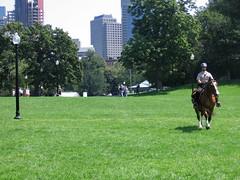 Not on lunch break anymore (Y^2) Tags: horse boston ranger bostoncommon patrol