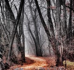 Dark Trail by Scott Hudson *, on Flickr