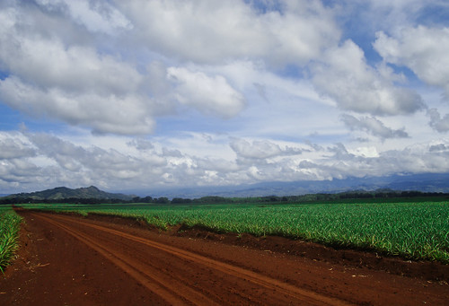 Del Monte pineapple field, Mindanao, Philippines