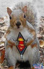 superman-squirrel