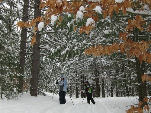 Pinhey Forrest ski