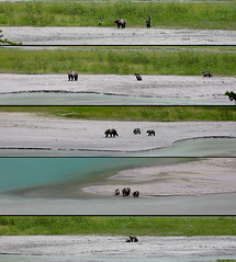 20030624_09 Grizzly bear mother & cubs (Ursus arctos horribilis) | Lake Louise, Banff National Park, Alberta, Canada | Click downward arrow for more size options (ratexla) Tags: 2003 life bear park family playing canada cute water beautiful animal animals female walking cub cool sand earth wildlife bears drinking national alberta banff cubs np grizzly lakelouise polyptych 1000views zoology tellus grizzlybear canadianrockies djur organism nonhumananimals canadianrockymountains ursusarctoshorribilis fuckingcool pentaptych thecanadianrockies nonhumananimal unlimitedphotos 24jun2003 ratexlascanadatrip ratexlaslakelouisetrip photophotospicturepicturesimageimagesfotofotonbildbilder ratexlascanadatrip2003