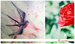 // Swallow And Rose. ([  ] R di Rimmel) Tags: park red parco verde green love rose tattoo canon rouge traditional rosa natura marco swallow rosso amore eleonora tatuaggio eos350 rondine foti rimmel fidanzato stuppao