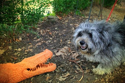Blog cani con foto e racconti cani
