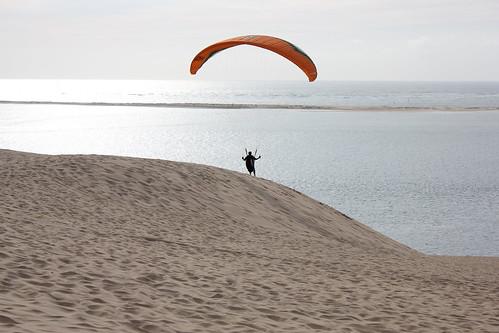 Olivier à la dune