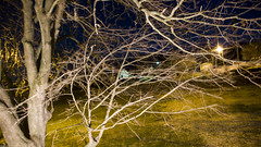 At Night (Jim on the Wall) Tags: leica longexposure blue tree yellow delete10 night digital yard delete9 delete5 lights delete2 delete6 delete7 branches delete8 delete3 delete delete4 delete11 dlux3