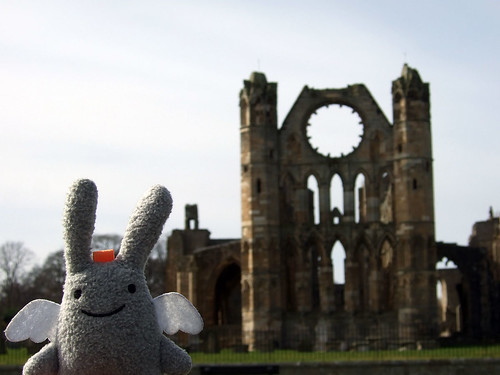 Angel Bunny at Elgin Cathedral