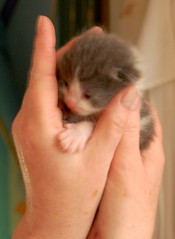 11 days old Tootsie's Tot