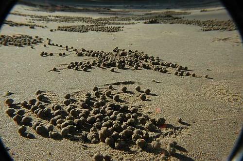 Weird Sand Balls