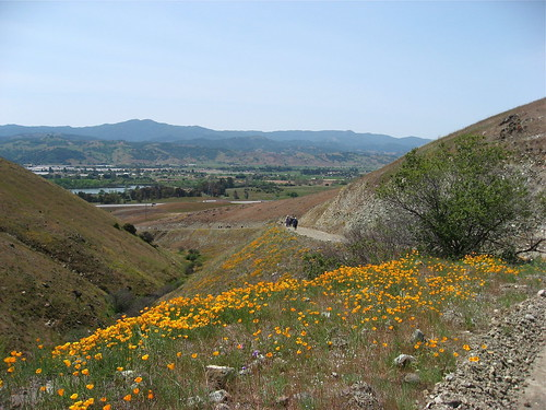 poppies and view of Coyote Valley
