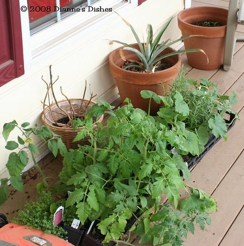 Tomatoes, Cucumbers, Herbs, Squash, Etc.